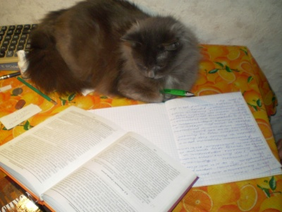It`s my clever cat. She can to read, to write and sometimes want to rest...