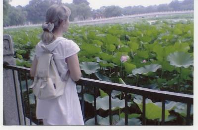 China, pink lotosy 06.